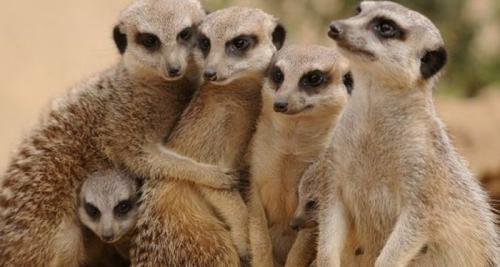 Викторина эти удивительные животные. Викторина о животных для 3-4 классов с ответами