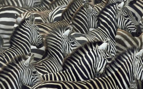 Правда или ложь вопросы про животных. Интересные факты о животных: правда или вымысел?