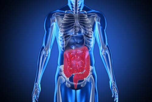 Интересные факты о пищеварительной системе человека. 25 занимательных фактов о пищеварительной системе человека