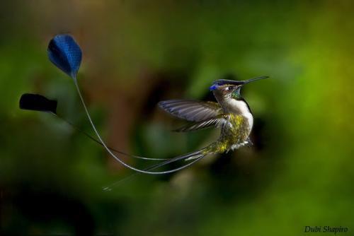 Птицы Самые удивительные. Самые редкие и удивительные птицы в мире